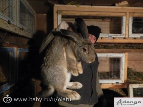 продажа кроликов в новосибирске на авито получить