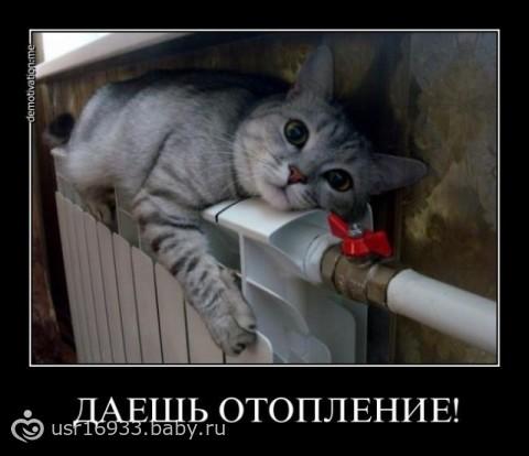 Если во сне поцарапала кошка - конкуренты лишат доходов, если вам снится своя кошка, которая живет с вами в доме