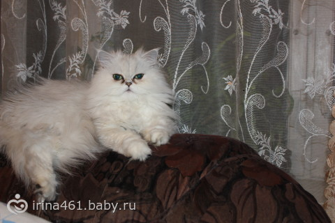 http://cs31.babysfera.ru/8/2/5/c/41507626.228537207.jpeg