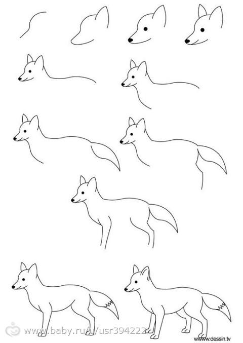 Схемы рисования животных и