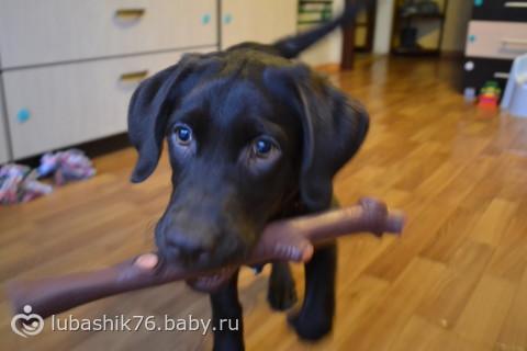 У меня была собака ... я ее любил)))