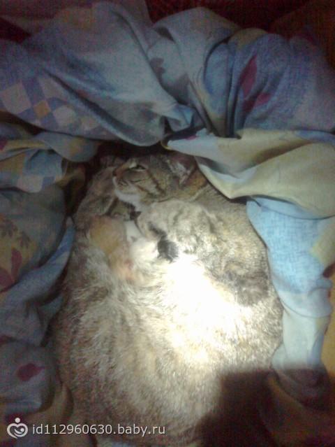 Беременная кошка и котята во сне