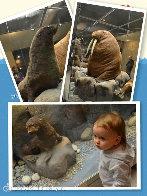 Дарвинский музей (большой фотоотчет)