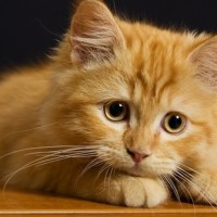 Счастливая Кошечка