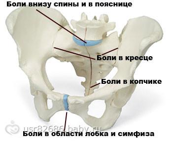 Пиявки при остеохондрозе поясничного отдела точки