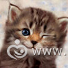 avatarki_youloveit_ru_kitten_115